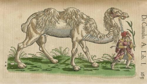 4 | Конрад Геснер. Historiae Animalium - Истории животных | ARTeveryday.org