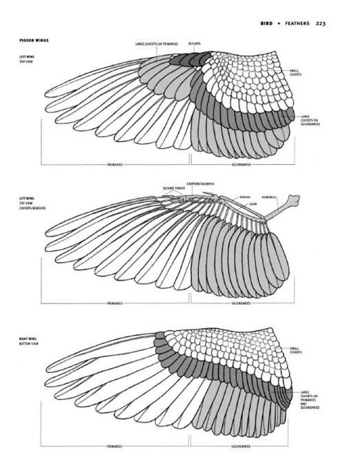 2 | Анатомия животных для художников | ARTeveryday.org