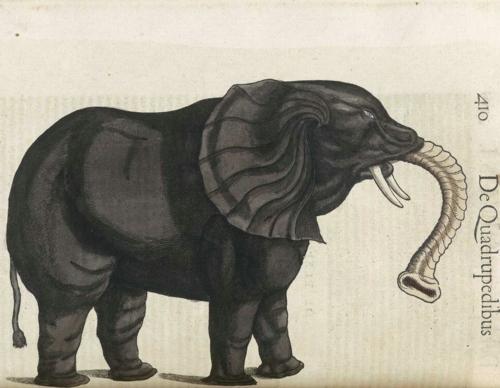5 | Конрад Геснер. Historiae Animalium - Истории животных | ARTeveryday.org