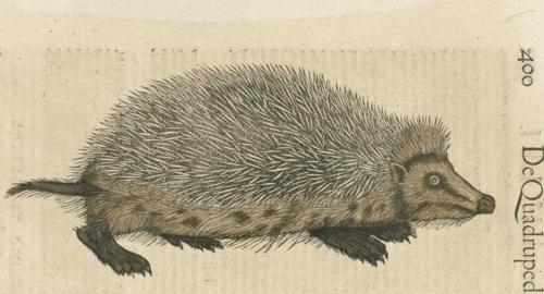 6 | Конрад Геснер. Historiae Animalium - Истории животных | ARTeveryday.org