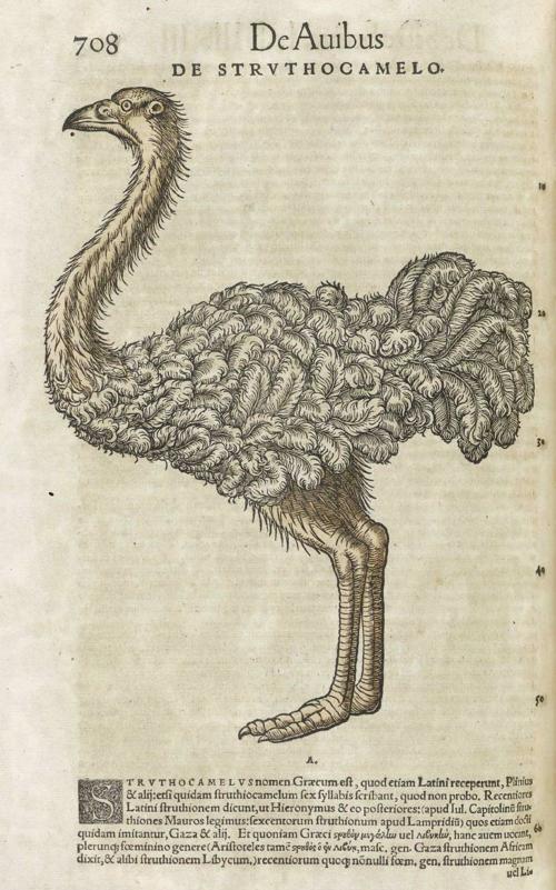8 | Конрад Геснер. Historiae Animalium - Истории животных | ARTeveryday.org