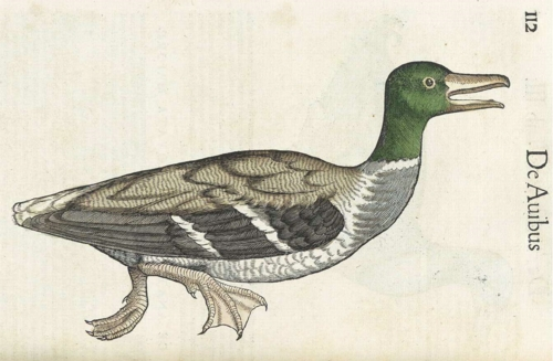 10 | Конрад Геснер. Historiae Animalium - Истории животных | ARTeveryday.org