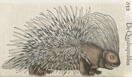 11 | Конрад Геснер. Historiae Animalium - Истории животных | ARTeveryday.org