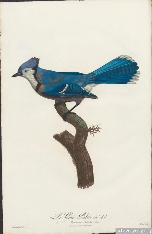 7 | Райские птицы | ARTeveryday.org